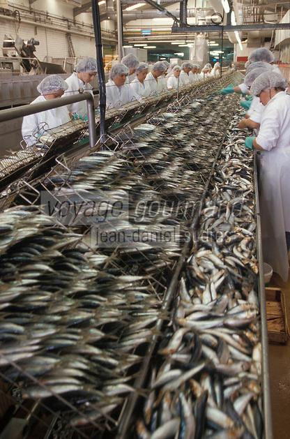 """Europe/France/Bretagne/29/Finistère/Douarnenez: Conserverie de sardines """"connétable"""" étêtage des sardines"""