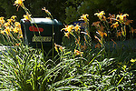 Rural mailbox with daylily flowers