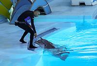 Tiertrainer bei der Delfinshow im Stadion Sam im Vergnügungspark Zoomarine - 25.09.2019: Zoomarine Park, Guia, Albufeira an der Algarve