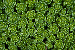 Green ground cover close-up patterns