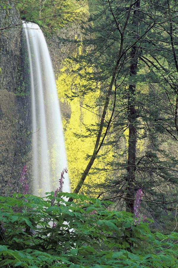 Latourell Falls, Columbia River Gorge, Portland, Oregon