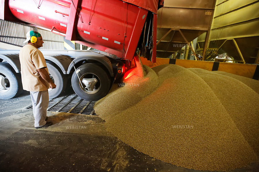 Bresil, etat Minas Gerais, Guaxupe, entrepot Cooxupe, 31 octobre 2012.<br /> <br /> Cooxupe est l&rsquo;une des plus grosses cooperatives bresiliennes de cafe. Elle a signe un partenariat avec Nespresso dans le cadre du Programme AAA. Elle dispose de plusieurs sites dont celui de Guaxupe qui s'est dote, en 2008, d'un laboratoire ultra-moderne d'analyse du cafe.<br /> Dechargement des grains de cafe qui tombent dans des conteneurs, a travers la grille.<br /> Reportage les Chants de cafe_soul of coffee, realise sur les acteurs terrain du programme de developpement durable Triple AAA de Nespresso.<br /> <br /> Brazil, Minas Gerais, Guaxupe, Cooxupe Warehouse, October 31, 2012 <br /> <br /> Cooxupe, one of the largest coffee cooperatives in Brazil, signed a partnership with Nespresso AAA Program. Cooxupe has several sites, including one in Guaxupe, which in 2008 acquired a state-of-the-art laboratory to analyze coffee. <br /> Coffee beans are unloaded into containers through a grid.  <br /> Assignment: les Chants de cafe_ Soul of Coffee, implemented on the fields of Nespresso&rsquo;s AAA Sustainable Quality Program.