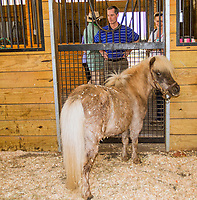 GEORGETOWN, KENTUCKY, MAY 06: Little Siver Charm at the14th Annual Fundraiser at Old Friends Farm on May 6, 2018 in Georetown, Kentucky. (Photo by Sue Kawczynski/Eclipse Sportswire/Getty Images)