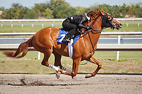 #7Fasig-Tipton Florida Sale,Under Tack Show. Palm Meadows Florida 03-23-2012 Arron Haggart/Eclipse Sportswire.