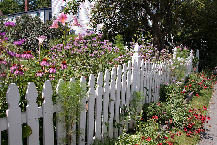 Pink flower garden plant flower stock photography for Short garden fence designs