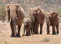 Elephant Train  Kenya 2015