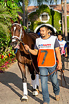 DEL MAR, CA  SEPTEMBER 2:  #7 Nucky, enters the paddock before the Runhappy Del Mar Futurity (Grade l) on September 2, 2019, at Del Mar Thoroughbred Club in Del Mar, CA.( Photo by Casey Phillips/Eclipse Sportswire/CSM)