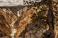Lowerfalls on the Yellowstone River