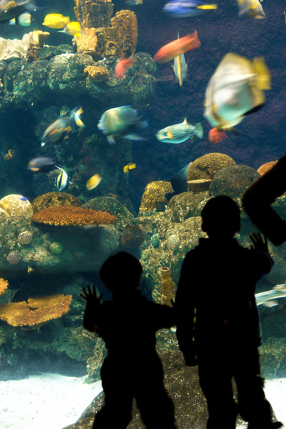 Young boys enjoy the aquariam exhibit at the Minnesota Zoo.