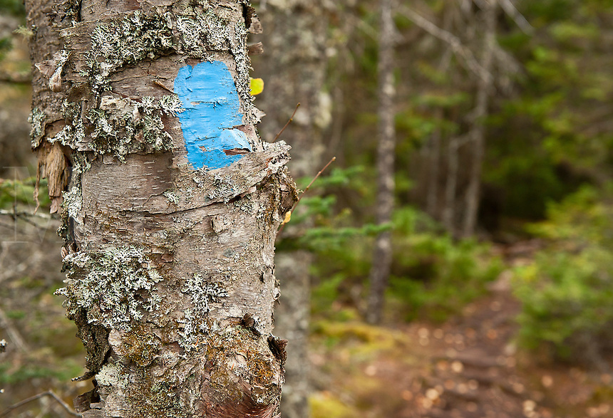 Hiking trail marker, Maine, USA