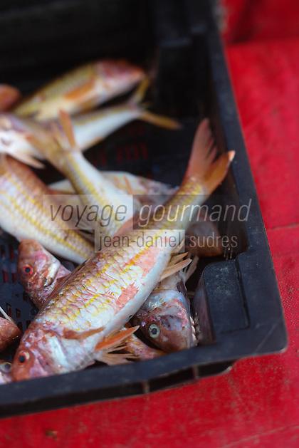 Europe/Provence-Alpes-Côte d'Azur/83/Var/Iles d'Hyères/Ile de Porquerolles: La pêche de Gérard Genta, pêcheur et restaurateur: Restaurant du Pêcheur - Hôtel Le Porquerollais   - Rougets,