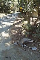 Dead deer struck by a vehicle.