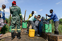 ZAMBIA, Mazabuka, tomato farming, spraying of pesticides and fungicides, mixing of chemicals like Funguran copper hydroxide and Cyrohex with water
