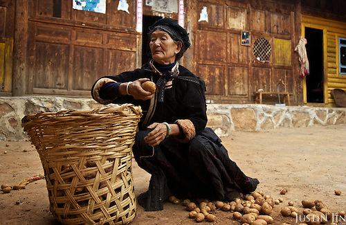 Li (surname) La Cuo, 66, who belongs to the musui minority, picks potatos at home near the legendary Lugu Hu Lake in Sichuan Province, southwestern China.