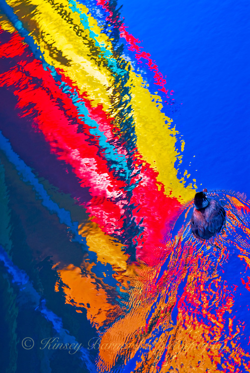 """SAILING SOLO""<br />