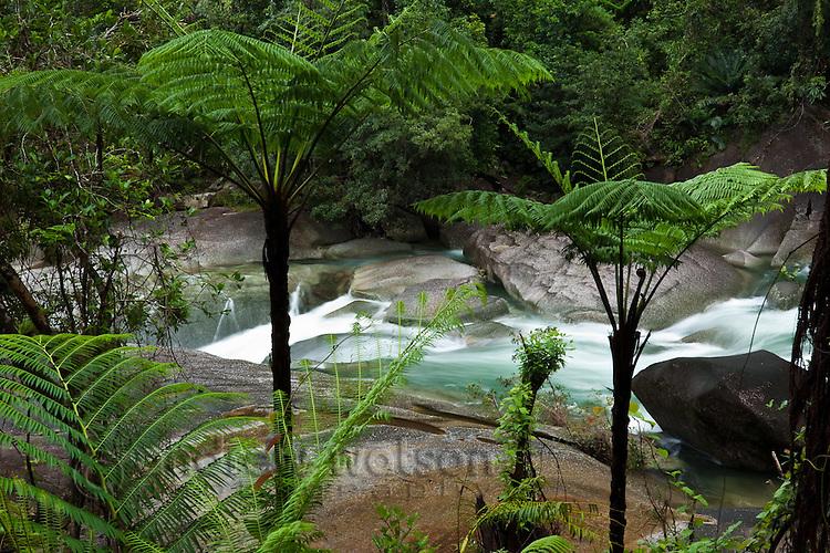 View through ferns to Devil's Pool at Babinda Boulders.  Babinda, Queensland, Australia