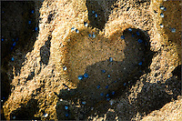 Heart-shaped outline in beach sand and rock with blue barnacles in water