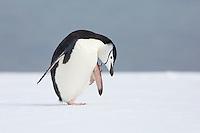 Antarctica - Antarctic Peninsula