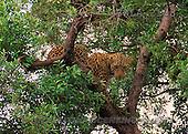 Carl, ANIMALS, wildlife, photos(SWLA2138,#A#)