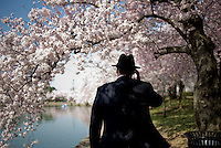 UNITED STATES - APRIL 9: Phil Jones, from Arlington, Va., adjusts his hat as he walks along the Tidal Basin with the blooming Cherry Trees. (Photo By Chris Maddaloni/CQ Roll Call)