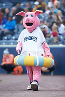 "West Michigan Whitecaps mascot ""Franky the Swimming Pig"" entertains fans prior to the Midwest League game against the South Bend Cubs at Fifth Third Ballpark on June 10, 2018 in Comstock Park, Michigan. The Cubs defeated the Whitecaps 5-4.  (Brian Westerholt/Four Seam Images)"