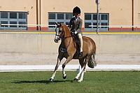 Medium Hunter Pony