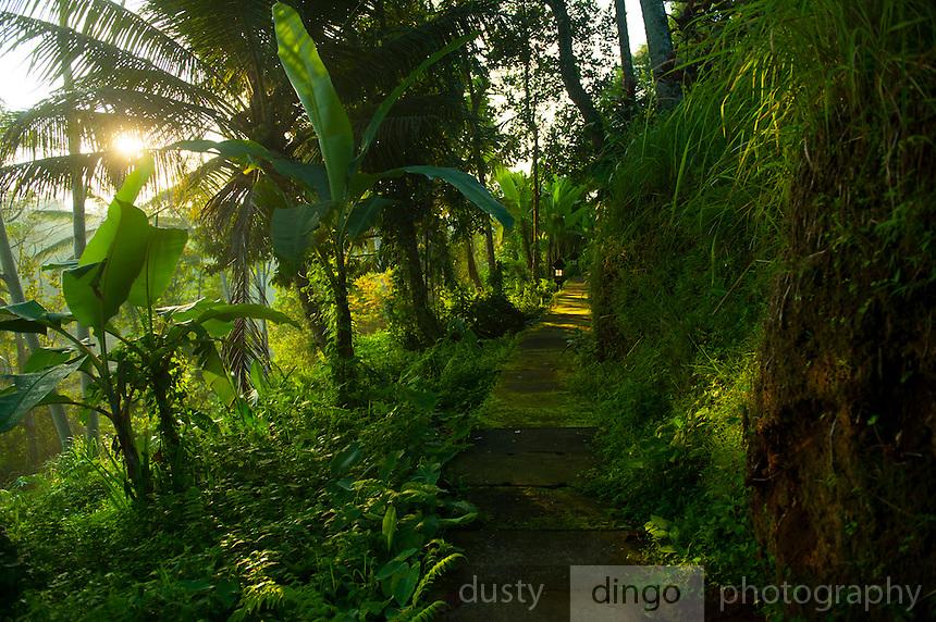 the path to/from our villa at Alam Sari, keliki, Bali