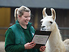London Zoo Annual Count 4th January 2016