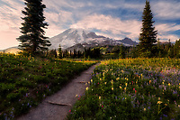Wildflowers, trail, Mt. Rainier and fog. Mt. Rainier National Park, Waqshington