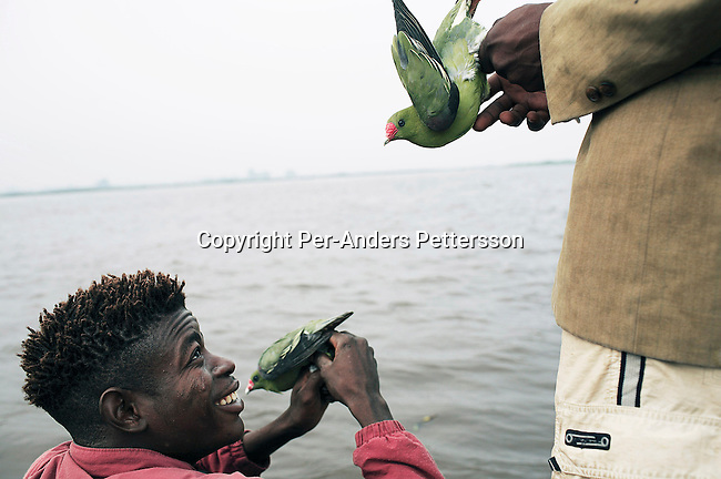 MBANDAKA, DEMOCRATIC REPUBLIC OF CONGO JUNE 26: Two unidentified men compare birds that they just bought, while traveling on a boat made of big trees on the Congo River on June 26, 2006 outside Mbandaka, Congo, DRC. A village woman along the river came with about one hundred birds that were sold for about $US 50 cents each. The birds were bought for food during the trip. The boat traveled with about 150 passengers from Bumba to Kinshasa, a journey of about 1300 kilometers. The Congo River is a lifeline for millions of people, who depend on it for transport and trade. Passengers slept in the open, with their goats, pigs and other animals. Boat travel is the only option for most people along the river as there?s no roads or infrastructure. Very few can afford to fly in a plane to the capital Kinshasa. During the Mobuto era, big boats run by the state company ONATRA dominated the river. These boats had cabins and restaurants etc. All the boats are now private and are mainly barges that transport goods. The crews sell tickets to passengers who travel in very bad conditions. The conditions on the boats often resemble conditions in a refugee camp. Congo is planning to hold general elections by July 2006, the first democratic elections in forty years. The Congolese and the international community are hoping that Congo will finally have piece and the country will be rebuilt. (Photo by Per-Anders Pettersson).