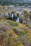 Point Lobos State Reserve, Monterey County, California, USA.