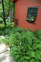 Foliage Garden in Shade with red House, ferns, hostas, wide view, greenery, container plants by windowsill, hanging chimes, beautiful scene in summer