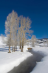 Hoarfrost on Cottonwood Trees, Lamar Valley, Yellowstone NP, WY, USA