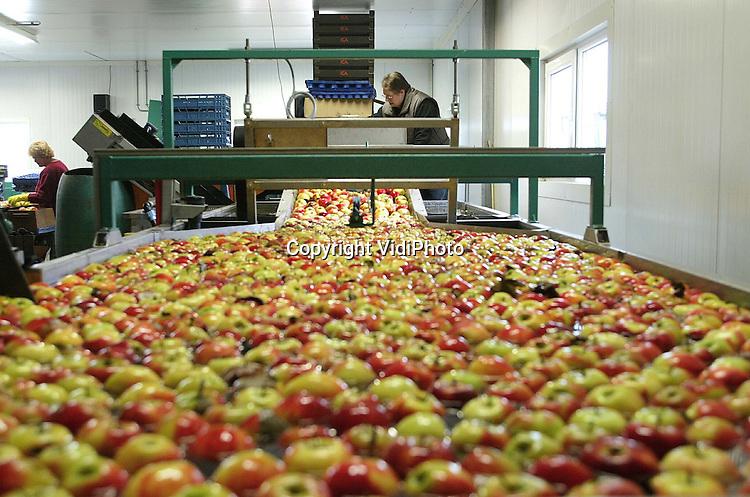 Foto: VidiPhoto..ANDELST - Bij fruitteler Jan van Olst in Andelst worden op dit moment nog volop appels uit de koelcel gesorteerd. Van Olst is een van de weinige fruittelers met naast een complete en kostbare moderne sorteerinstallatie, ook nog een gecombineerd dompelbak voor appels en peren. Omdat ook diverse andere fruittelers bij Van Olst hun appels en peren laten sorteren, blijft het zelfsorteren financieel interessant, ondanks dat vorig jaar de appeloogst in Nederland is gedaald met 13 procent. Dat is 50 miljoen kilo minder in vergelijking met 2001 (400 miljoen). Steeds meer fruittelers rooien namelijk hun appelbomen in ruil voor perenbomen.