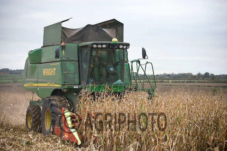 Contractor's combine harvesting maize on a Leicestershire dairy farm