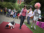 © Joel Goodman - 07973 332324 . 18 August 2013 . Sackville Park , Manchester , UK . The Red Carpet Walk event - owners walk their dogs over the red carpet in front of the audience . The Pink Dog Show , organised by Manchester Dogs' Home with red carpet walk and prizes for pooches . Photo credit : Joel Goodman