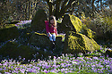 18/02/15  <br /> <br /> Despite forecasts of possible snow for the north later this week there is no stopping the advance of spring as Lydia Robinson (4) is surrounded by a carpet of crocuses at the University of Leicester Botanic Garden in Oadby, Leicestershire.<br /> <br /> All Rights Reserved - F Stop Press.  www.fstoppress.com. Tel: +44 (0)1335 418629 +44(0)7765 242650