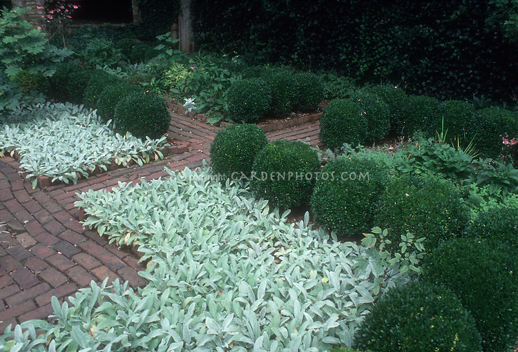 Formal garden with Stachys byzantina, Cross Estate, Morristown, NJ. Mirrored design of circular boxwood Buxus shrubs, lamb's ears, inset with brick patio, green serene garden scene