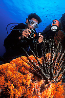 scuba diver with orange sponge and crinoid or feather star, Bonaire, Netherland Antilles, Caribbean, Atlantic