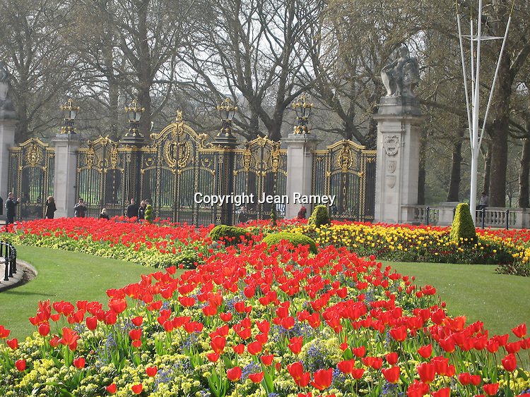 A Sea of Tulips surround the gates of Buckingham Palace