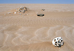 Skeleton unearthed as the dunes  have shifted.  This  corpse  was  left over from the graves of a  diamond mine in Namib Naukluft desert. Probably from the turn of the 19th to 20 th century. Access is restricted due to Diamond mining activity by De Beers.