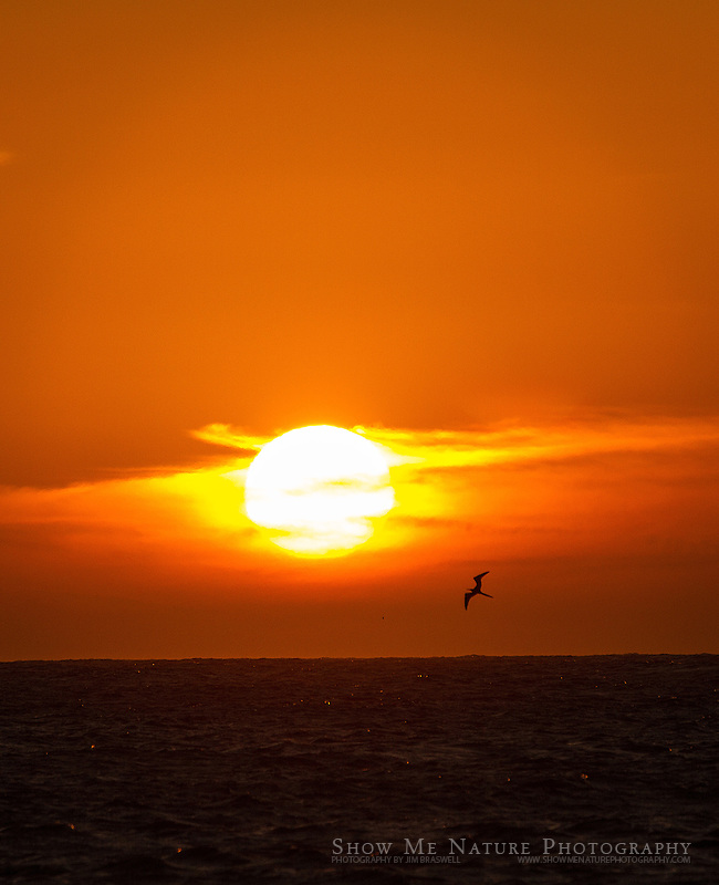 Baja sunset with Magnificent Frigatebird