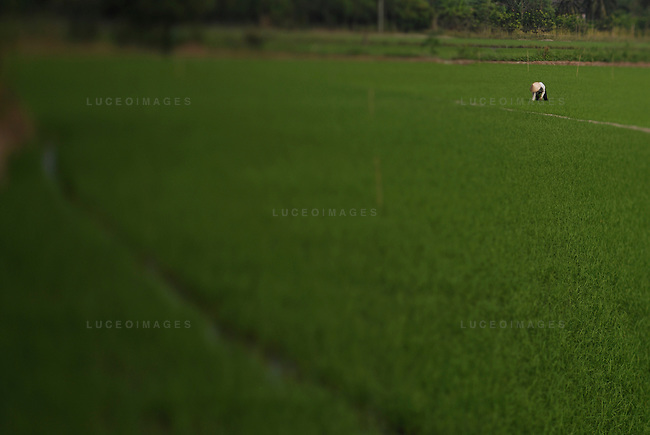 A woman works in the rice fields outside of Ho Chi Minh City, Vietnam.
