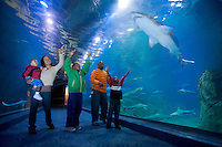 Family watching the Sharks Adventure Aquarium, Camden Waterfront, New Jersey