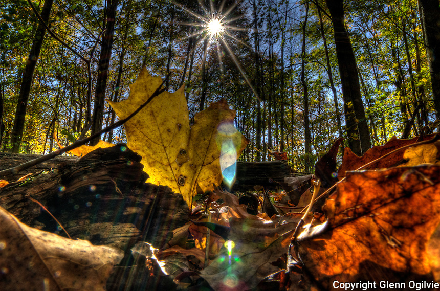 HDR Fall flora and fauna at Perch Creek Nature Habitat