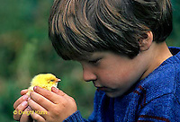 DG08-070x  Child with chick - newly hatched - dry and fluffy