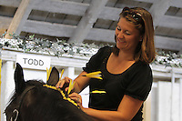 Angela Tenkley braids a clydesdale for River View (Polinder family) at the NW Washington Fair on  August 16, 2009 PHOTOS BY MERYL SCHENKER            ....schenker IMG_9732.JPG
