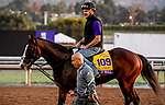 October 29, 2019 : Breeders' Cup Classic entrant War of Will, trained by Mark E. Casse, on the track in preparation for the Breeders' Cup World Championships  at Santa Anita Park in Arcadia, California on October 29, 2019. John Voorhees/Eclipse Sportswire/Breeders' Cup/CSM