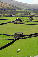 Stone barns near Gunnerside, North Yorkshire.