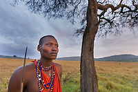 Masai tribesman at dawn on the African savannah by an umbrella acacia tree, Masai Mara, Kenya, Africa